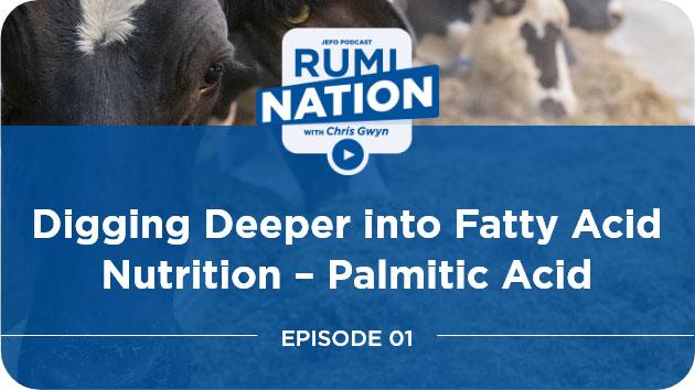 Digging Deeper into Fatty Acid Nutrition – Palmitic Acid