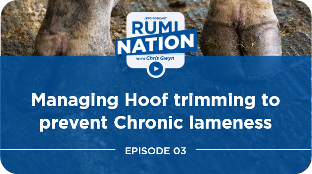 Managing Hoof trimming to prevent Chronic lameness